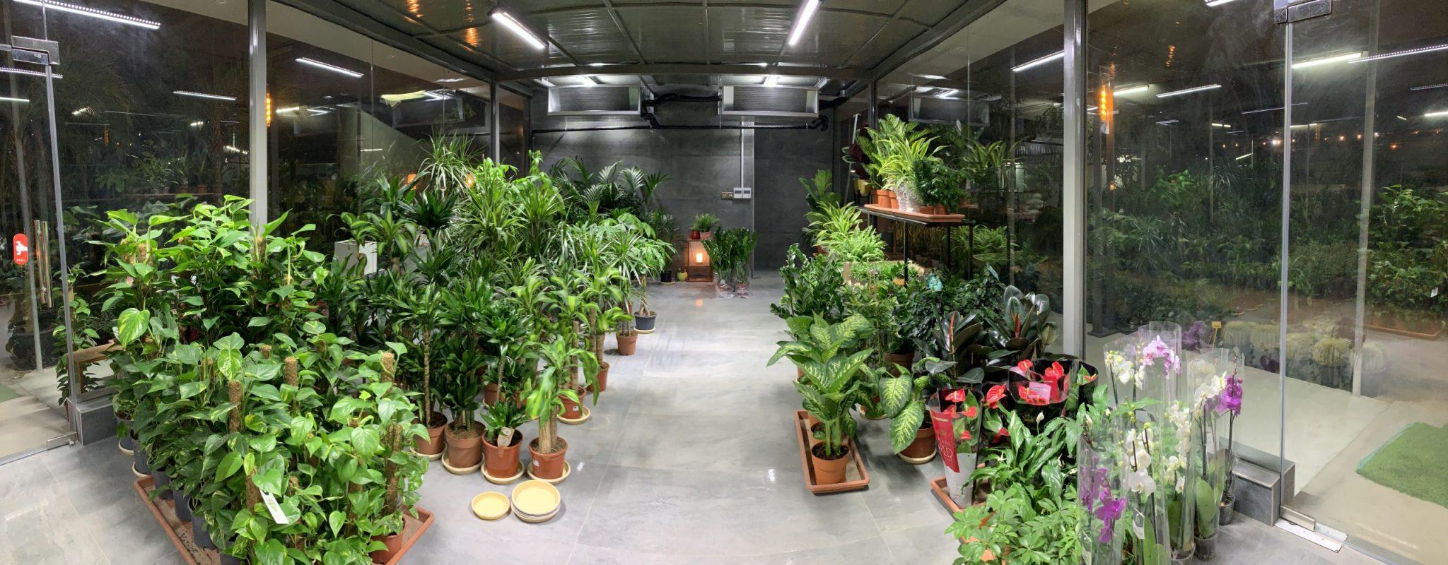 Wide collection of indoor plants