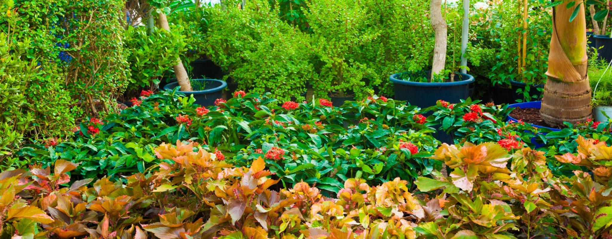 Oakland Agriculture Dubai plants pots nursery
